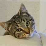 SPA chat à adopter Hermès