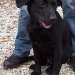 SPA chien à adopter Attila ADOPTE
