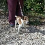 SPA chien à adopter Balto ADOPTE