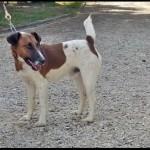 SPA chien à adopter Milou ADOPTE