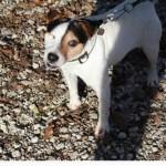 SPA chien à adopter Auroch ADOPTE