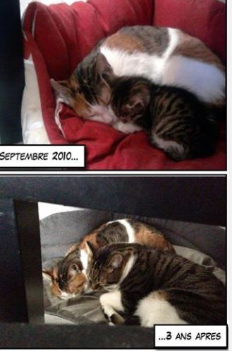 eywa adoption chien chat spa du centre loiret orl ans fert st aubin chilleurs. Black Bedroom Furniture Sets. Home Design Ideas