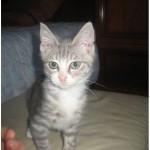 SPA chat à adopter Bipper ADOPTE