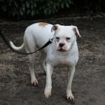 SPA chien à adopter Eléna ADOPTEE
