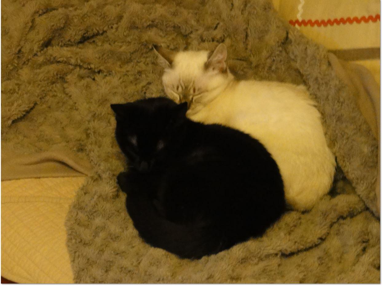jules et jim3 adoption chien chat spa du centre loiret orl ans fert st aubin chilleurs. Black Bedroom Furniture Sets. Home Design Ideas