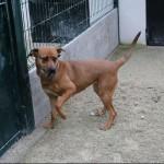 SPA chien à adopter Luna ADOPTEE