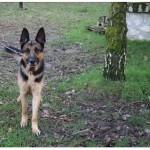 SPA chien à adopter Tornade ADOPTE