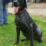 SPA chien à adopter Edji ADOPTE