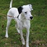 SPA chien à adopter Jin