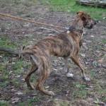 SPA chien à adopter Maxxie ADOPTE