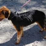 SPA chien à adopter Black