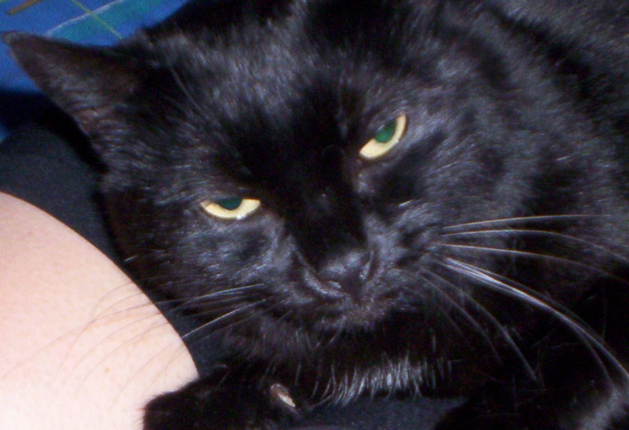mystik etoile adoption chien chat spa du centre loiret orl ans fert st aubin chilleurs. Black Bedroom Furniture Sets. Home Design Ideas