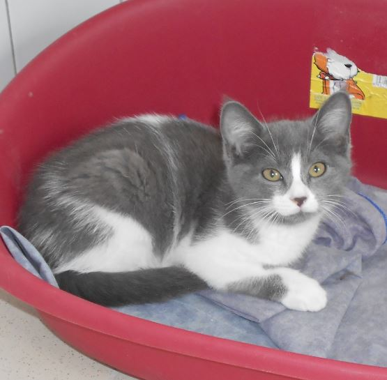 chats adopter adoption chien chat spa du centre loiret orl ans fert st aubin chilleurs. Black Bedroom Furniture Sets. Home Design Ideas