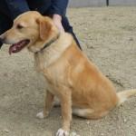 SPA chien à adopter Léo ADOPTE