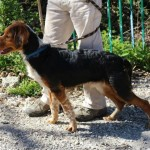 SPA chien à adopter Maverick