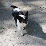 SPA chien à adopter Rita ADOPTEE
