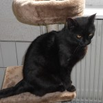 SPA chat à adopter Volx ADOPTE