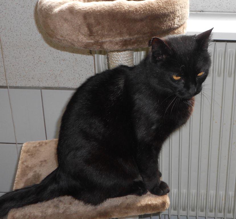 Femme Cougar Soumise Sur Toulouse Pour Plan Cul
