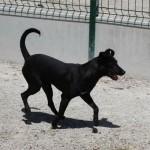 SPA chien à adopter Bambi ADOPTE