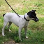 SPA chien à adopter Ilona ADOPTE