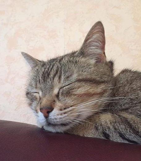 framboise adoption chien chat spa du centre loiret orl ans fert st aubin chilleurs. Black Bedroom Furniture Sets. Home Design Ideas