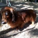 SPA chien à adopter Titou ADOPTE