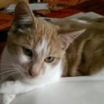 Maisie1