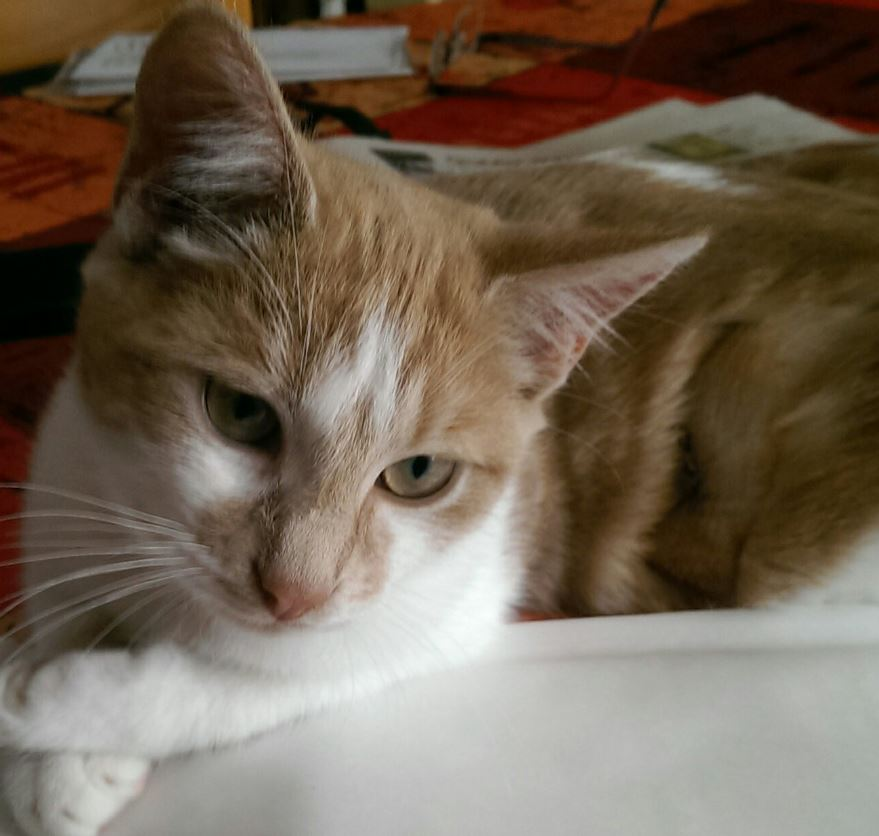 maisie1 adoption chien chat spa du centre loiret orl ans fert st aubin chilleurs. Black Bedroom Furniture Sets. Home Design Ideas