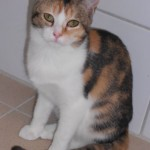 SPA chat à adopter Luciole ADOPTEE