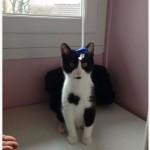 SPA chat à adopter Bibi ADOPTE