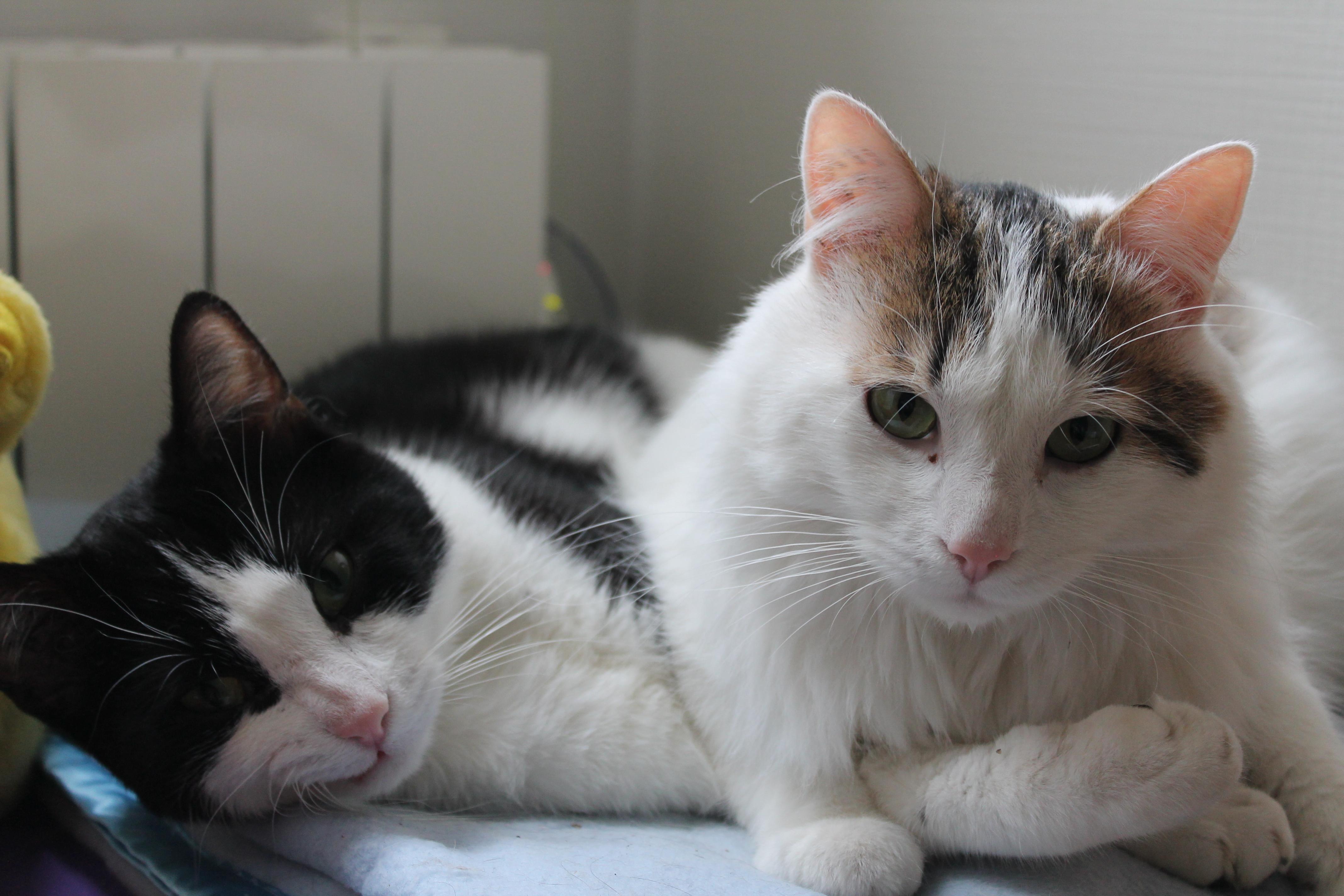 dumbo et felix adoption chien chat spa du centre loiret orl ans fert st aubin chilleurs. Black Bedroom Furniture Sets. Home Design Ideas