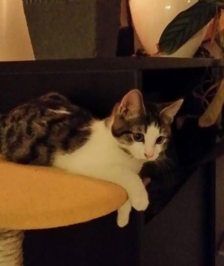 h lios adoption chien chat spa du centre loiret orl ans fert st aubin chilleurs. Black Bedroom Furniture Sets. Home Design Ideas