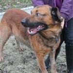 SPA chien à adopter Marti ADOPTE