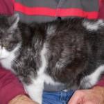 SPA chat à adopter Mamina ADOPTE