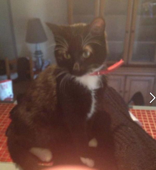 chaussette adoption chien chat spa du centre loiret orl ans fert st aubin chilleurs. Black Bedroom Furniture Sets. Home Design Ideas