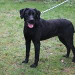 SPA chien à adopter Laska ADOPTEE