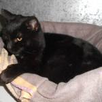 SPA chat à adopter Rasta ADOPTE