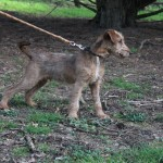 SPA chien à adopter Tex ADOPTE