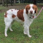 SPA chien à adopter Gucci ADOPTE