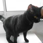 SPA chat à adopter Lizara ADOPTEE