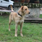 SPA chien à adopter Pépère ADOPTE