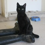 SPA chat à adopter Peinture ADOPTE