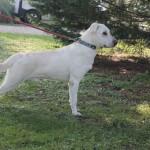SPA chien à adopter Yuri ADOPTE