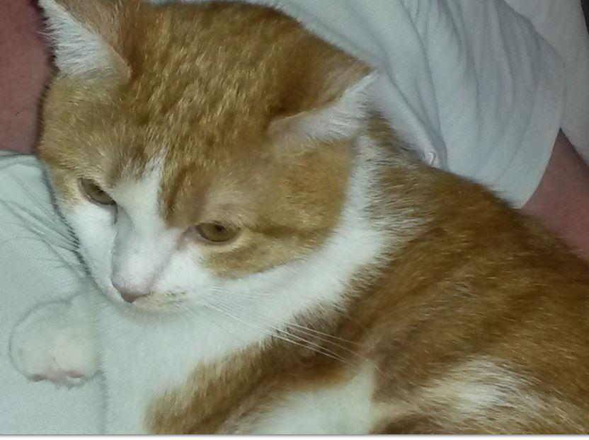 bidouille adoption chien chat spa du centre loiret orl ans fert st aubin chilleurs. Black Bedroom Furniture Sets. Home Design Ideas