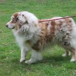 SPA chien à adopter Graff ADOPTE