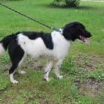 SPA chien à adopter Fido ADOPTE