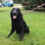 SPA chien à adopter Leo ADOPTE