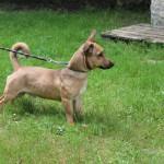 SPA chien à adopter Maliki ADOPTE
