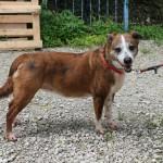 SPA chien à adopter Mirca