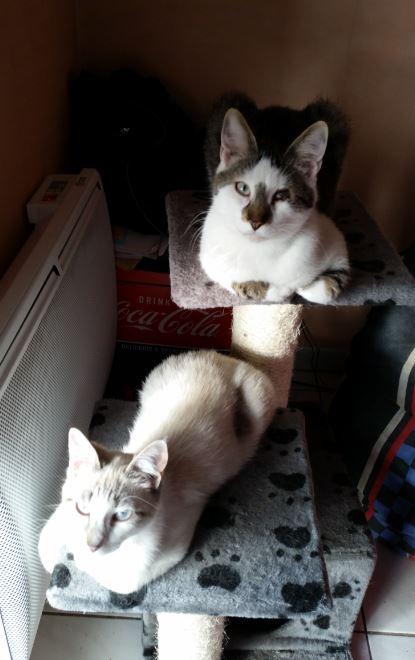 saphir8 adoption chien chat spa du centre loiret orl ans fert st aubin chilleurs. Black Bedroom Furniture Sets. Home Design Ideas